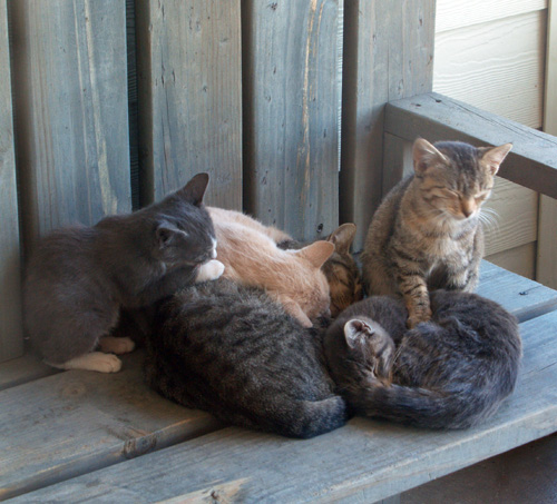Several kitties napping in a big warm pile on the bench on my porch