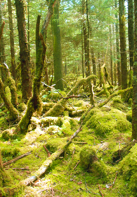moss covered rainforest floor near Juneau, Alaska