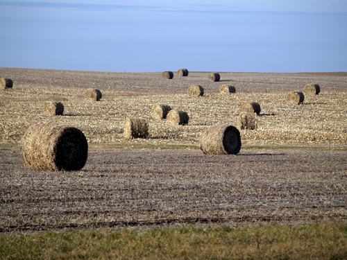 round bales of corn stalks sitting in a field in Nebraska
