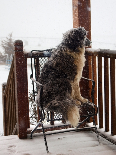 puppy sitting on a patio chair looking out at the blizzard