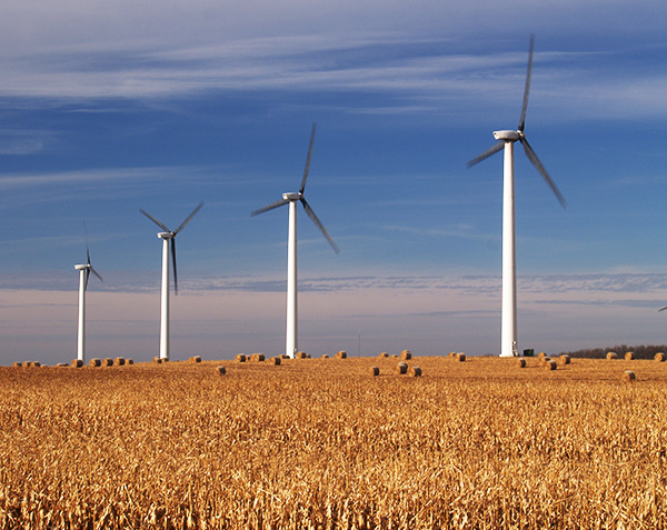 four large wind turbines rising over a cornfield in fall in Minnesota