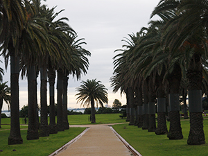 Palm trees at the St. Kilda beach at Melbourne, Australia