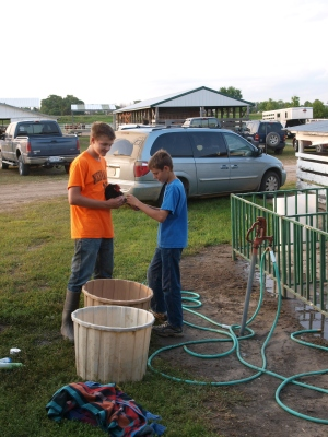 boys giving their chicken a bath at the county fair