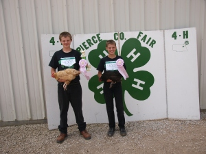 boys displaying the awards they won with their chickens at the county fair
