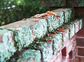 a brick wall with some dead leaves on the top