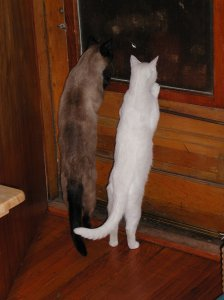 two cats standing on their hind legs looking out the door
