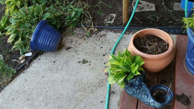 potted plants eaten by sheep