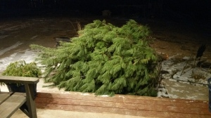 large christmas tree taken outside